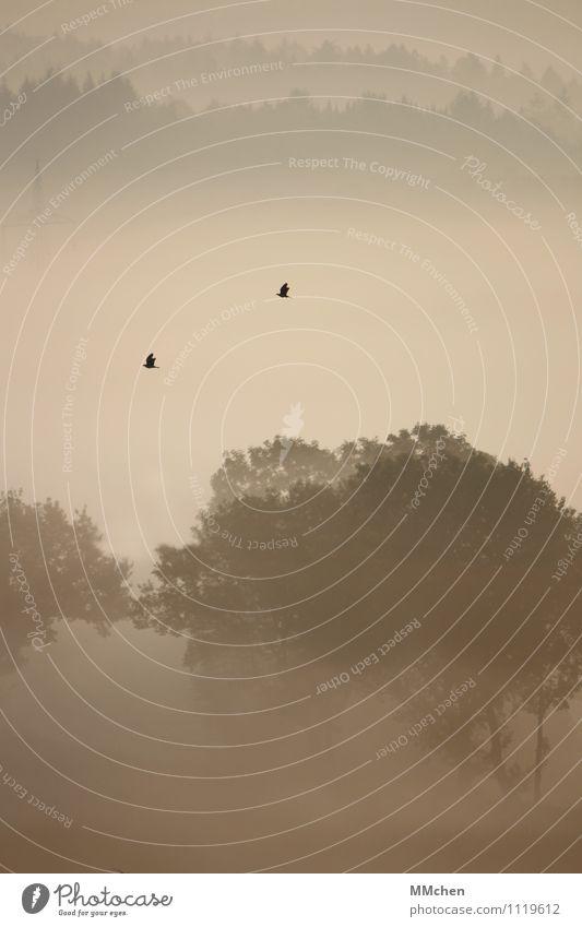 TagTraum Natur Ferien & Urlaub & Reisen Baum Erholung Einsamkeit ruhig Tier Wald Berge u. Gebirge Herbst natürlich Garten Freiheit fliegen Vogel