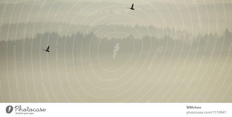 FlugRoute Himmel Natur Ferien & Urlaub & Reisen Baum Erholung ruhig Tier Ferne Wald Bewegung Herbst Freiheit fliegen Vogel Horizont Zufriedenheit