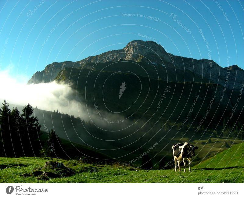 Black&White Himmel weiß Baum grün blau schwarz Wolken Wald Gras Berge u. Gebirge Bewegung grau Stein Kuh Dynamik Säugetier