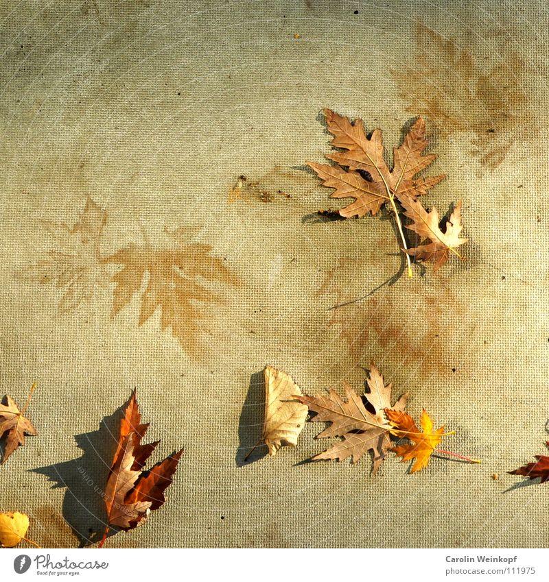 Sein und Schein III Blatt Herbst Beton Spuren geheimnisvoll Jahreszeiten Schönes Wetter Spiegelbild November Rätsel unklar Dezember Oktober September herbstlich