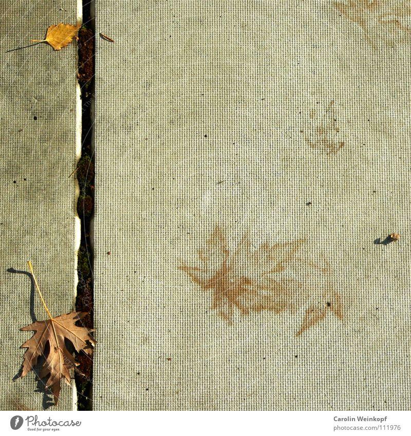 Sein und Schein IV Blatt Einsamkeit gelb Herbst grau Linie braun Beton Spuren geheimnisvoll Jahreszeiten Schönes Wetter verloren Spiegelbild November Rätsel