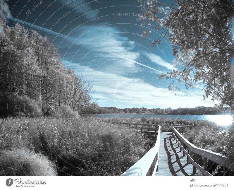 the way Himmel Baum Wald Wege & Pfade See Steg Fototechnik Infrarotaufnahme Farbinfrarot weiß-blau