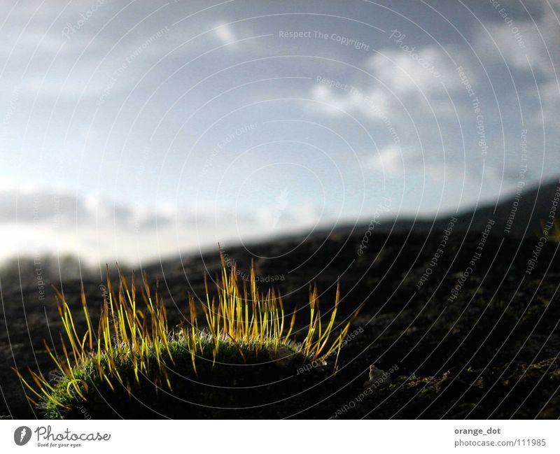 green glow Himmel Natur Holzmehl Frühling grass sun sky blue clowd landscape mountain grey dosh Mauer