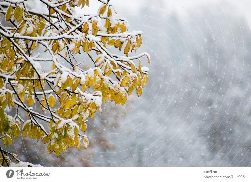 Summer in the City Winter Baum Wald kalt Flocke Schneeflocke Blatt Herbst weiß gelb grün schwarz zuletzt schön besinnlich ruhig Glühwein Vorfreude countryside