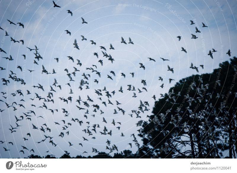 Der Schwarm weiß Sommer Freude Tier Umwelt Freiheit Park Zufriedenheit leuchten elegant Lächeln genießen fantastisch beobachten Schönes Wetter entdecken