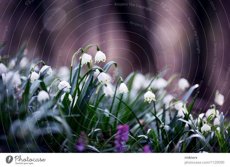 ein Frühlingsbild Natur Pflanze grün weiß Blume Landschaft dunkel Wald Umwelt Frühling elegant frisch Fröhlichkeit ästhetisch Blühend Schönes Wetter