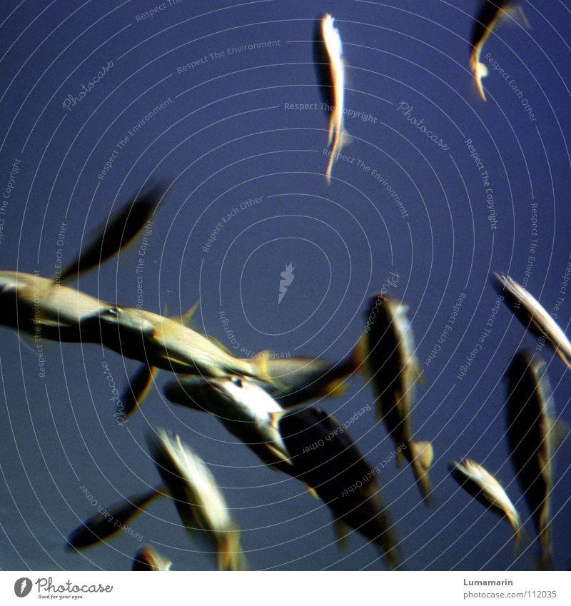 shimmering splash Freundschaft Bewegung flüchten kaputt spritzig Geschwindigkeit Leben schimmern glänzend schön Bewegungsunschärfe Unschärfe Meer Aquarium