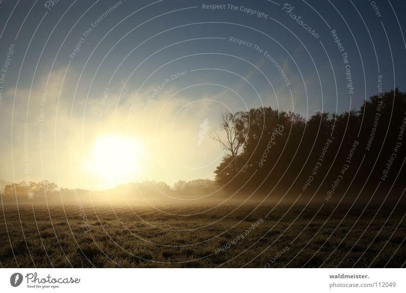 Morgennebel Wiese Nebel Baum Wald Wolken Sommer Herbst Romantik Hoffnung Frieden Morgendämmerung Bodeninversion Müritz-Nationalpark Traurigkeit