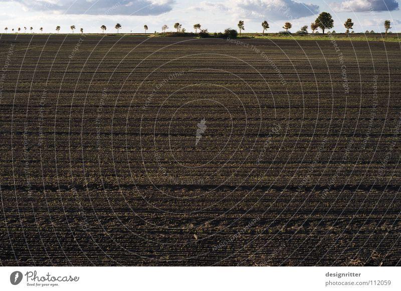 weit Baum Pflanze Ernährung Ferne Straße Feld Lebensmittel Horizont Erde Wachstum Bodenbelag Spuren Streifen Bauernhof Getreide Landwirtschaft
