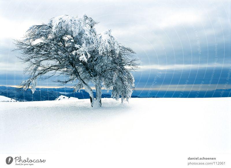 Weihnachtskarte 11 Schwarzwald weiß Tiefschnee wandern Freizeit & Hobby Ferien & Urlaub & Reisen Verhext mystisch abstrakt Hintergrundbild Schneelandschaft