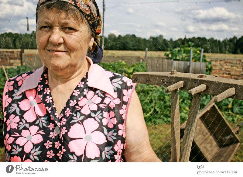 zahn der zeit Frau Großmutter alt Wachstum Ruhestand Landwirt Bauernhof Tier Landwirtschaft Ernährung Zerealien Vitamin Gras Stroh trocken trocknen edel