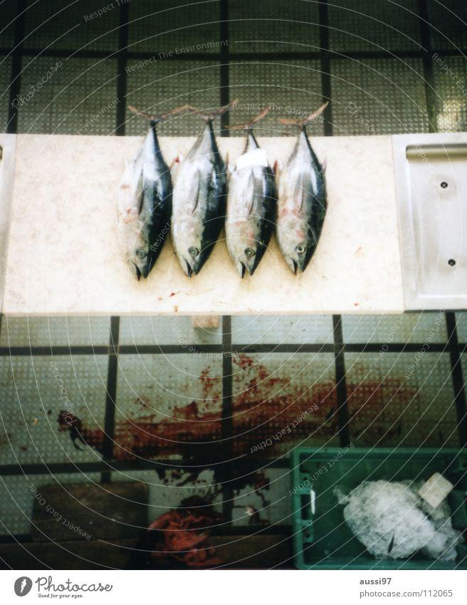 Flipper ist unser bester Freund Ernährung Lebensmittel Fisch Zähne Netz Appetit & Hunger Blut Angeln global Blei Fischereiwirtschaft Konservendose Thunfisch