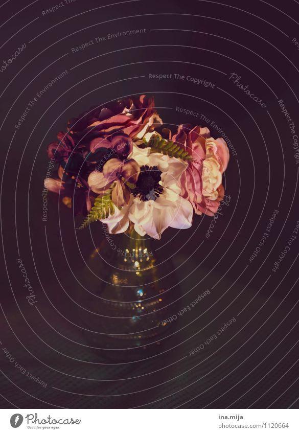 ewige schönheit Natur Pflanze Sommer Blume Umwelt Blüte Feste & Feiern Stimmung rosa Dekoration & Verzierung ästhetisch Romantik Hochzeit Trauer Rose