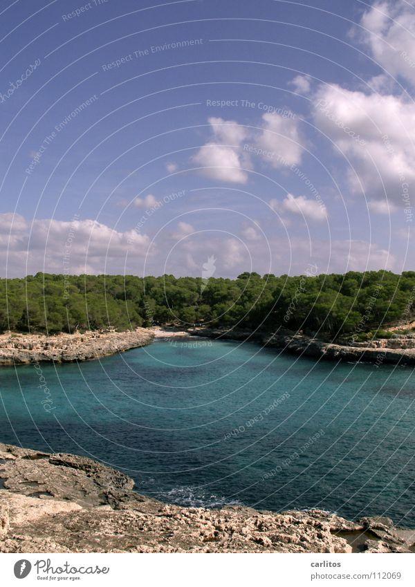 Ich will Urlaub! Himmel Wasser Baum Sommer Freude Strand Meer Ferien & Urlaub & Reisen Wolken Wald Erholung Freiheit Glück Sand träumen Wärme