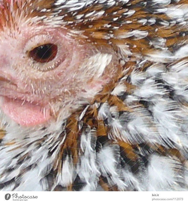 MADAME POULETTE Natur Tier ruhig Erholung Auge Garten Vogel Park fliegen Wildtier Lebensmittel Zufriedenheit frei Luftverkehr Ernährung Feder