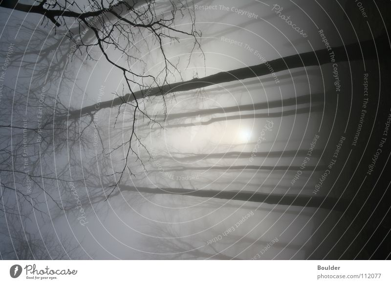 Nebelwald Baum Winter Wald kalt Herbst Regen Nebel mystisch