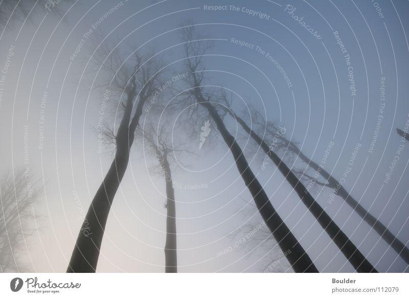 Nebelwald Baum Winter Wald kalt Herbst Regen mystisch