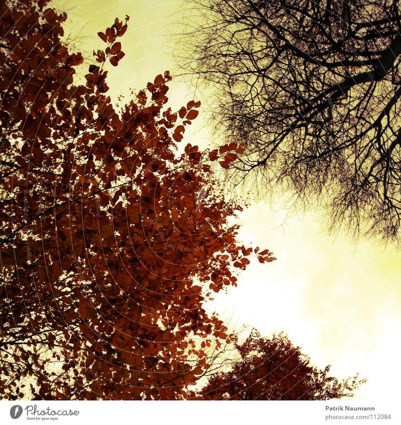 der eine hats... der andere nicht! Herbst Blatt Baum Sonnenuntergang Froschperspektive Physik gelb rot Idylle Wald Holzmehl Baumstamm Zusammensein herbstlich