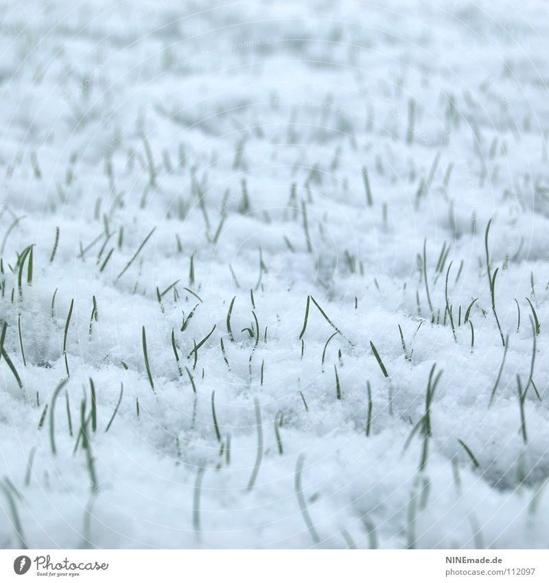 Stehplätze weiß grün Winter kalt Schnee Wiese Gras Eis frisch neu Rasen Spitze Halm kämpfen November Stachel