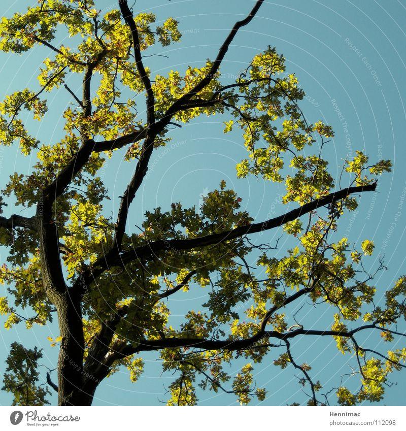 So schnell gibt der Wald nicht auf! Himmel blau grün Baum Pflanze Blatt Leben Frühling neu Ast Blühend Baumstamm Blütenknospen Baumrinde Mai April