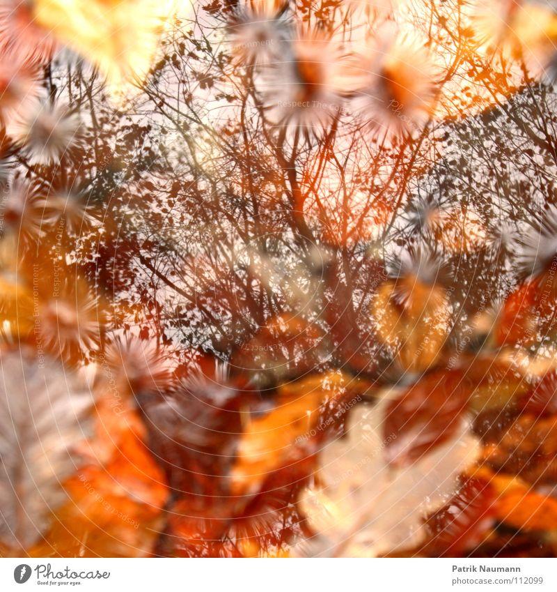 Man sieht den Baum vor lauter Blättern nicht Wasser Himmel Baum rot Blatt gelb Wald Herbst Wärme orange Physik fallen Ast Pfütze Haufen