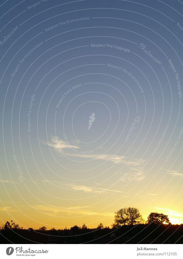 Platz zum Denken Sonnenuntergang gelb Wolken Altokumulus floccus fein zart Luft Horizont Sonnenaufgang Morgen spät Nacht Abend glänzend Niedergang Baum Wald