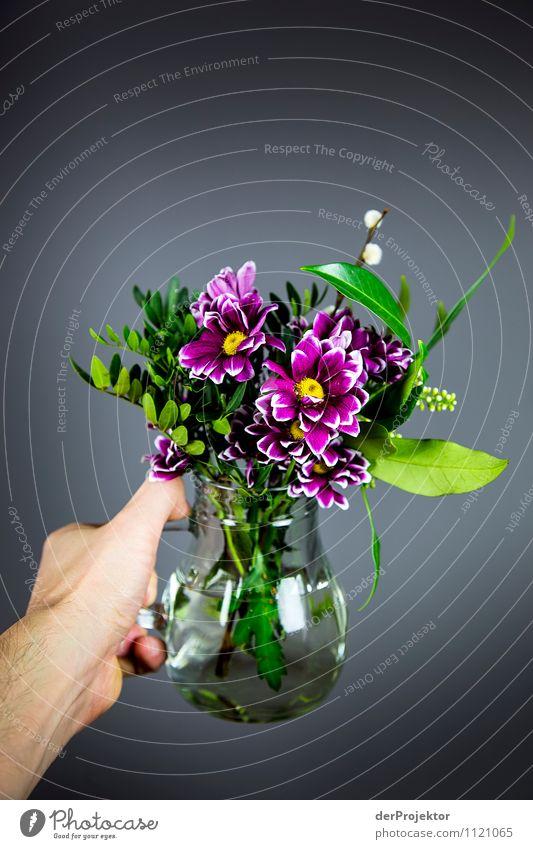 Da für dich Natur Pflanze schön Blume Hand Freude Gefühle Liebe Stil Glück klein Kunst Lifestyle Zusammensein Freundschaft Design