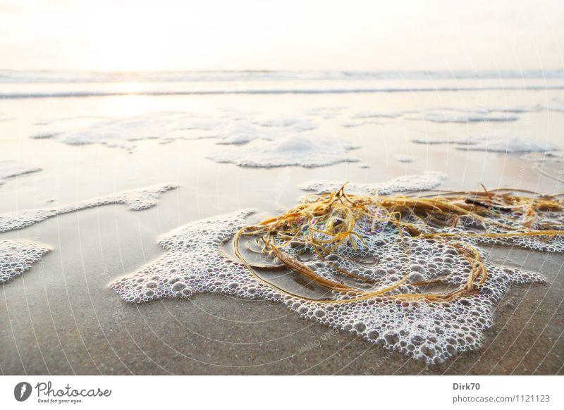 Strandgut Ferien & Urlaub & Reisen Wasser Sommer Sonne Meer Landschaft Ferne Küste Schwimmen & Baden hell Sand leuchten Wellen Schönes Wetter Sauberkeit