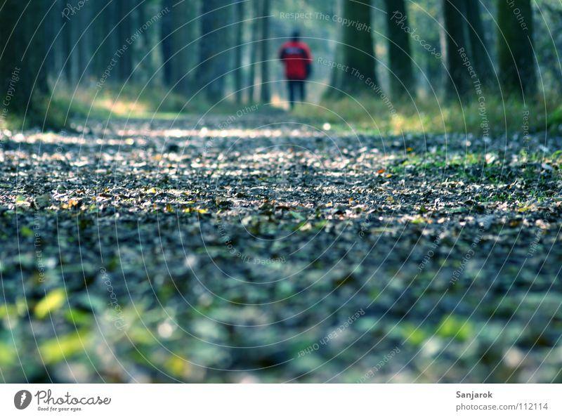 Rotjäckchen und der böse Wolf Mann Baum Blatt Wald Herbst Gras Garten Wege & Pfade Park Nebel Spaziergang Fußweg Ahorn Eiche Laubbaum Waldboden
