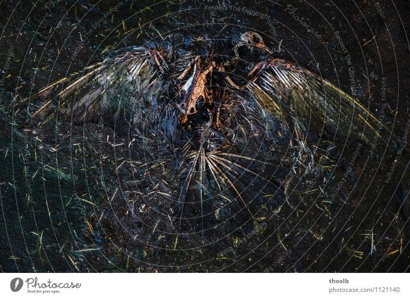 Vanitas Sinnesorgane ruhig Meditation Halloween Trauerfeier Beerdigung Skulptur Zoo Subkultur Umwelt Natur Tier Vogel Zeichen Fährte alt dunkel gruselig kaputt
