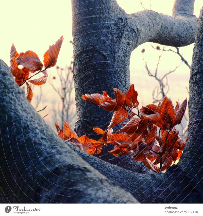 Herbst Blatt rot Baum Wald Tod Denken kalt Winter Licht Jahreszeiten Aktion Biologie beobachten Prozess Trauer Makroaufnahme Nahaufnahme Farbe färben Ende Natur