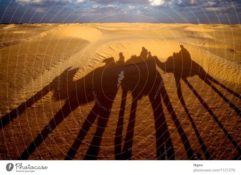 die wüste der sahara Sand Himmel Wolken Pfote braun gelb grau grün rot schwarz weiß douze gold Tunesien Sahara Camel Düne gekrümmt Menschen gewölbt kreisen