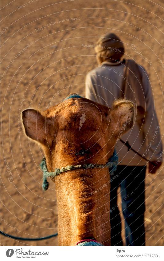 Menschen in der Mann Erwachsene Sand tragen braun gelb grau grün rot schwarz weiß douze gold Tunesien Sahara Camel Kopf wüst Düne gekrümmt gewölbt kreisen