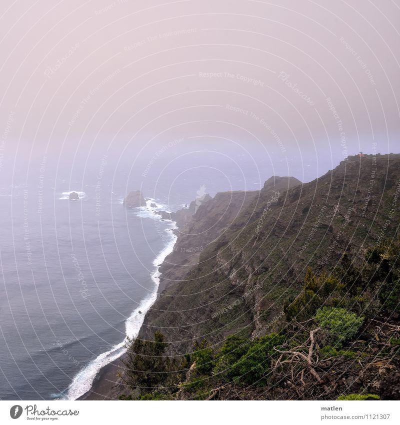 1000 Meter ü.d.M. Natur Landschaft Pflanze Himmel Wolken Horizont Frühling Klima Wetter schlechtes Wetter Nebel Baum Gras Wald Felsen Küste Bucht Meer blau