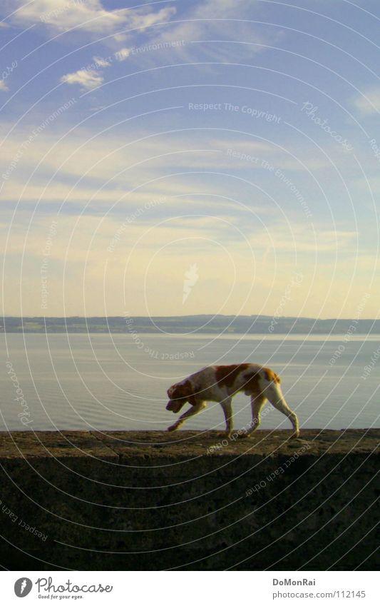 See-Hund Himmel Wasser blau Wolken schwarz Tier Wand Freiheit Bewegung Wege & Pfade Stein Mauer Luft Horizont