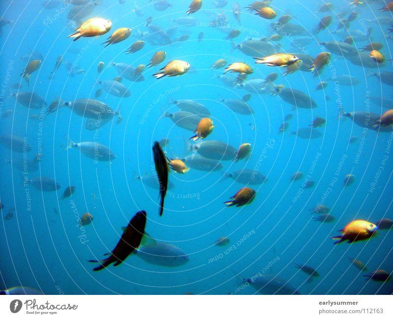 Gegen den Strom blau Ferien & Urlaub & Reisen Wasser Sommer Sonne Meer Tier Strand träumen Insel nass Ausflug Fisch tauchen tief türkis