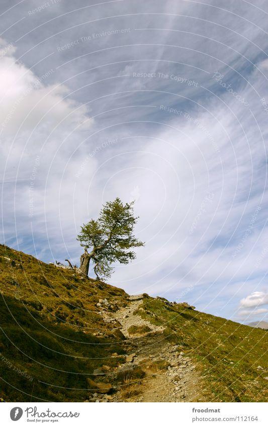 Baum Natur Himmel Einsamkeit Berge u. Gebirge Wege & Pfade Schweiz Alpen Idylle