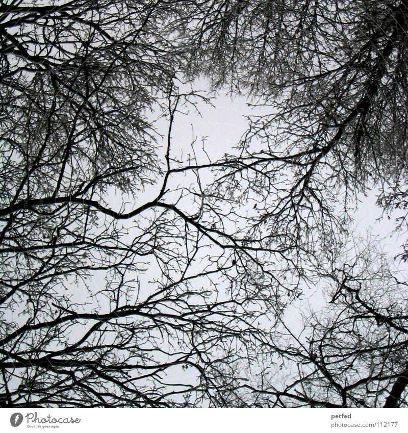 Baumkronen XIV Herbst Wald Blatt Winter schwarz weiß unten Wolken Himmel Ast Zweig Natur blau Schatten hoch fallen Wind