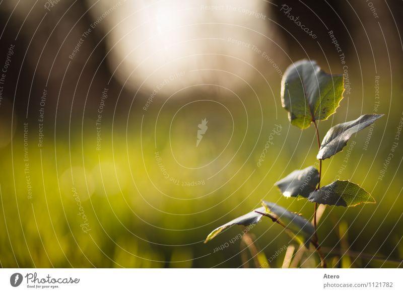 Früh am Morgen Natur Pflanze Efeu Grünpflanze Park frisch hell gelb grün orange Farbfoto Außenaufnahme Detailaufnahme Menschenleer Textfreiraum links Tag