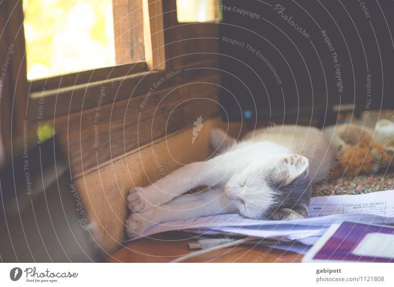 Ausspannen und genießen Katze Natur Erholung ruhig Tier Leben Glück Zufriedenheit Idylle Lebensfreude schlafen Pause Gelassenheit Haustier Leichtigkeit
