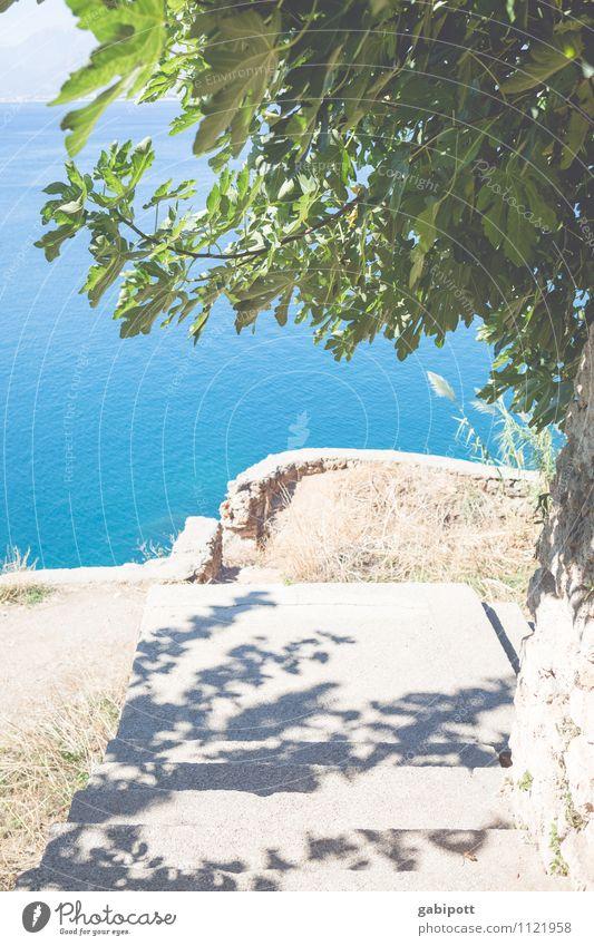 Sommer Ferien & Urlaub & Reisen blau grün Sonne Baum Erholung Meer Blatt Landschaft ruhig Strand Zufriedenheit Tourismus Ausflug Schönes Wetter