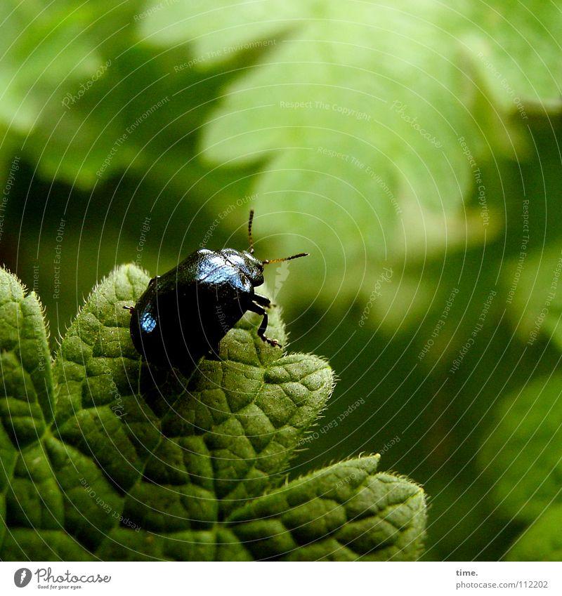 Cliffhanger (Nachmacher) Farbfoto Gedeckte Farben Außenaufnahme Menschenleer Morgen Garten Klettern Bergsteigen Natur Blatt Käfer festhalten hängen krabbeln