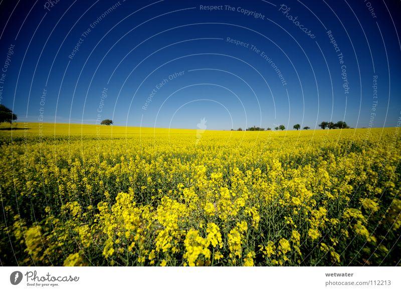 Traumsommer Sommer Feld gelb Himmel Wiese Raps knallig mehrfarbig Landwirtschaft Deutschland Mittag träumen field blue sky blau meadow farben colour Ferne