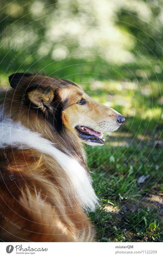 Osterhund. Kunst ästhetisch tierisch Tier Hund Windhund Außenaufnahme Haustier Wiese Park Gassi gehen Hundeblick Farbfoto Gedeckte Farben Nahaufnahme