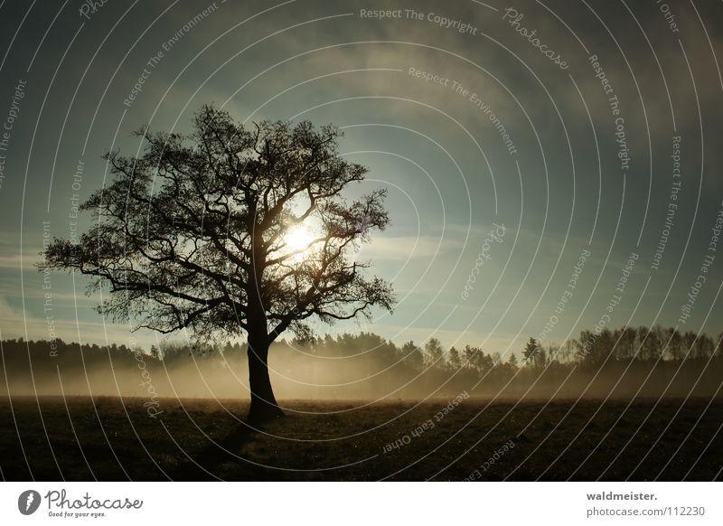 Baum im Nebel Natur Himmel Sonne ruhig Einsamkeit Wiese Landschaft Romantik Sehnsucht