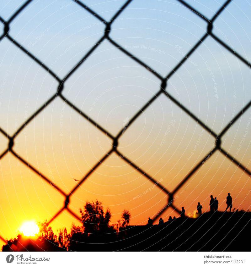 Zaungast Sommer Sonne Gute Laune Sonnenuntergang Romantik Zufriedenheit Maschendraht abgelegen Schlaufe Hügel Mensch Vogel Baum rot schwarz Freude
