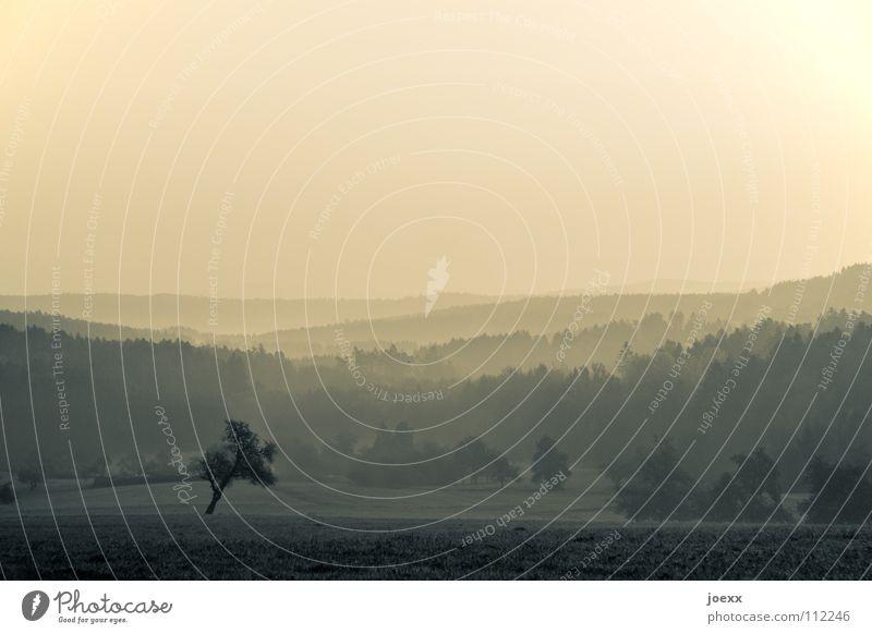 Waldvorsteher Angst Baum Baumreihe Bodennebel dunkel Erholung Erinnerung Morgen Tau grauenvoll gruselig Herbst Hügel Idylle Licht Nebel Nebelwand unklar