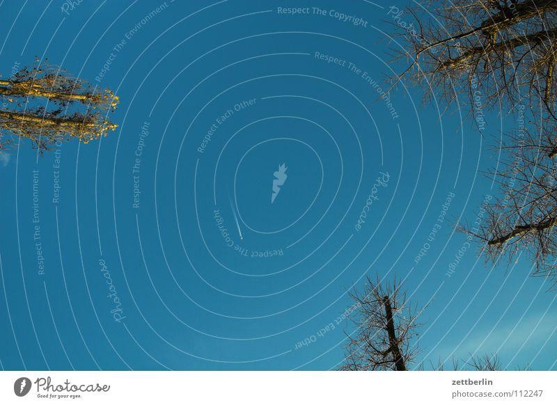 Paar Bäume, ein Flugzeug Baum Wald Park Kondensstreifen Froschperspektive vertikal Luft Himmel Herbst blau Luftverkehr fliegen hans-guck-in-die-luft