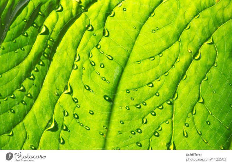 Erfrischung Natur Pflanze Wasser Wassertropfen Baum Grünpflanze exotisch grün Wellness feucht Feuchtgebiete Blattgrün Blattadern Blattfaser tropfend Nahaufnahme