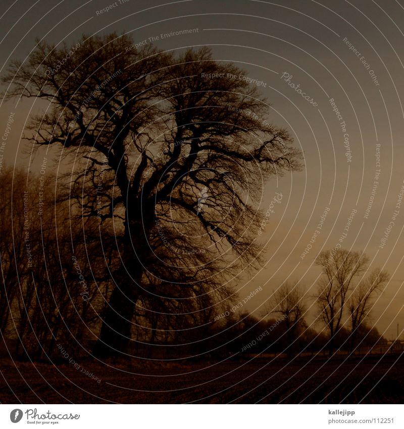 german aische Morgennebel Horizont ungewiss Eiche Brandenburg Reh Baum Allee Straßenverkehr Unfallgefahr Auffahrunfall Hirsche Bauernhof Wohnsiedlung Nebel Tau